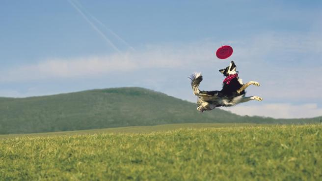 dog-breeds-frisbee-catching_2707f3dac1c03e69